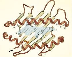 The gene marker for AS