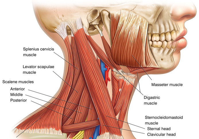 Ear ache can be caused by neck pain
